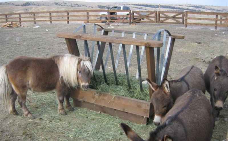 A special minature horse\'s feeder in Gallatin Gateway, MT